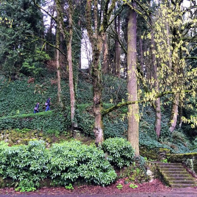 Portland hiking trail, Washington Park.